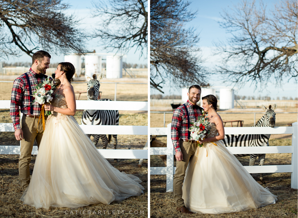 A beautiful rustic winter wedding inspiration shoot yukon 23 wedding photo photobombed by a zebra oklahoma wedding photographers yukon express clydesdales venue junglespirit Choice Image